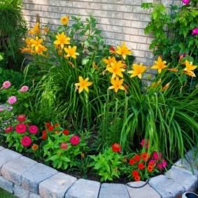 цветы для сада фото обзор