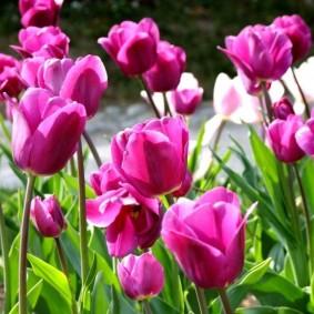 цветы для сада обзор идеи