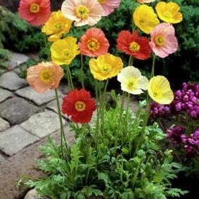 цветы для сада виды декора