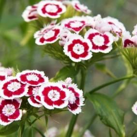 цветы для сада виды оформления