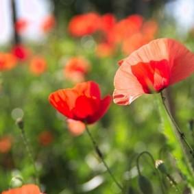 цветы для сада варианты дизайна