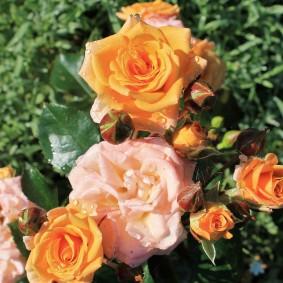 цветы для сада варианты декора