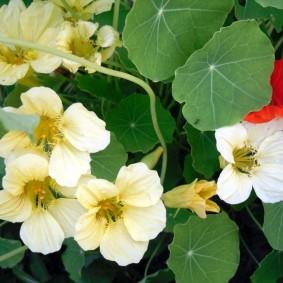 цветы для сада дизайн фото