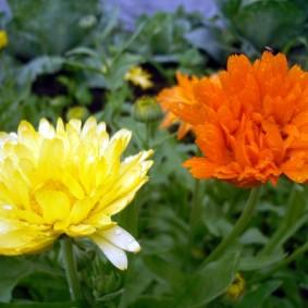 цветы для сада фото дизайна