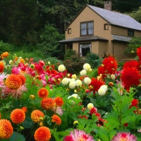 цветы для сада дизайн