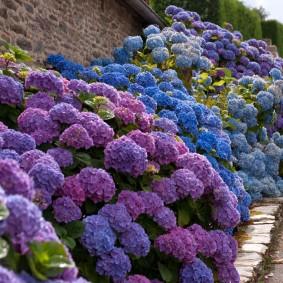 цветы для сада фото идеи