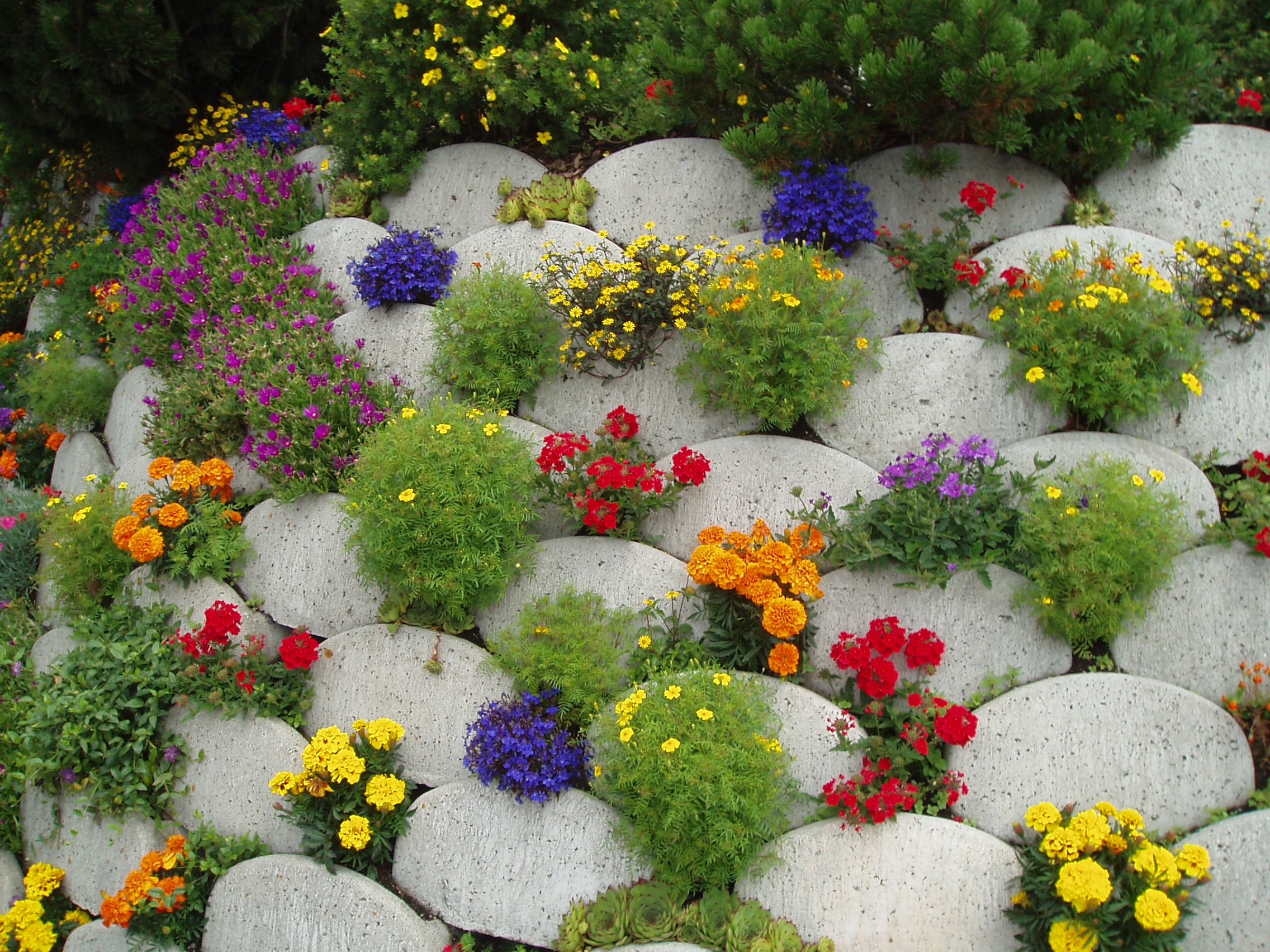 цветы для сада фото