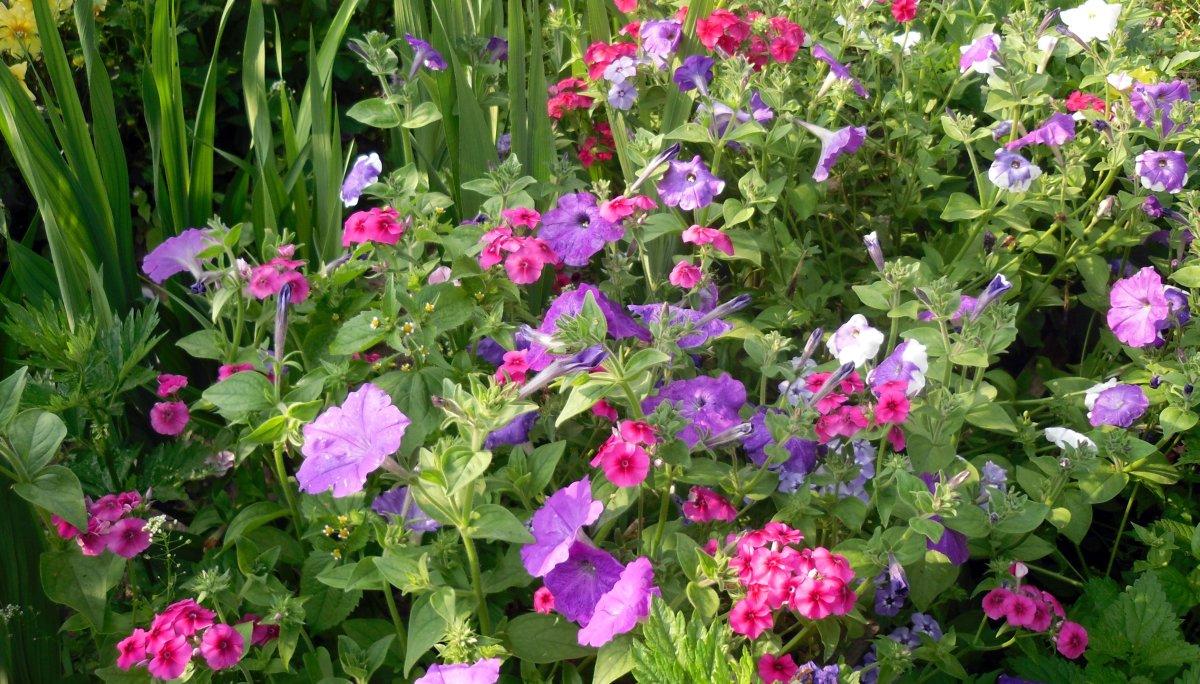 цветы для сада оформление