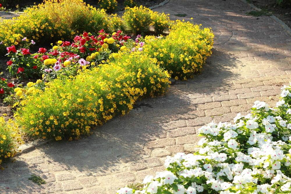 Желтые и белые цветы около садовой дорожки