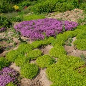 декоративная трава для сада идеи декор