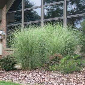 декоративная трава для сада идеи декора