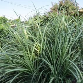декоративная трава для сада идеи оформление