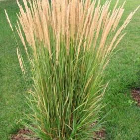 декоративная трава для сада идеи оформления