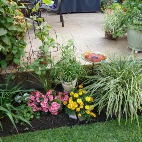 декоративная трава для сада дизайн