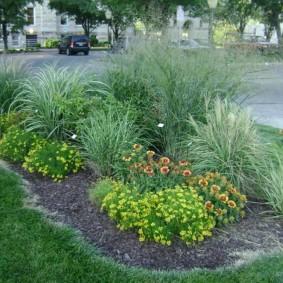 декоративная трава для сада фото видов