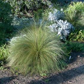 декоративная трава для сада идеи виды