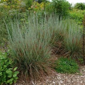 декоративная трава для сада виды декора