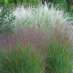 декоративная трава для сада виды оформления