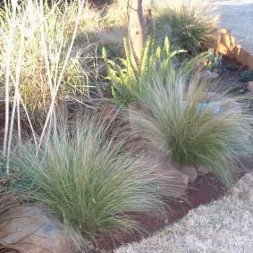 декоративная трава для сада варианты дизайна