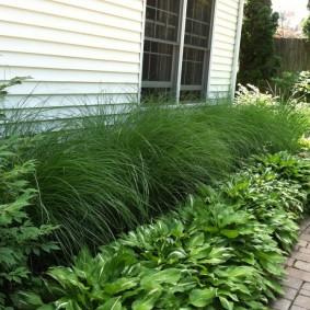 декоративная трава для сада варианты декора