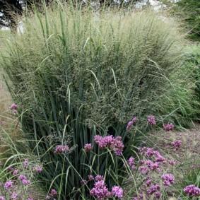 декоративная трава для сада дизайн фото