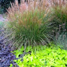 декоративная трава для сада уход