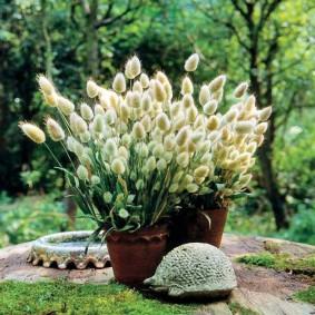 декоративная трава для сада сорта
