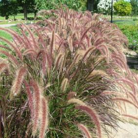 декоративная трава для сада декорирование