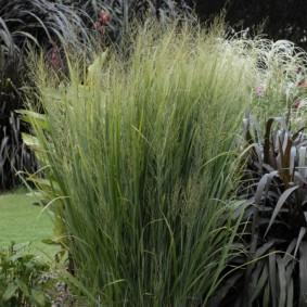 декоративная трава для сада декор