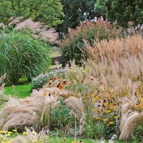 декоративная трава идеи фото