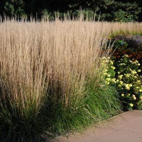 декоративная трава высокорослая идеи