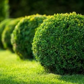 декоративные кустарники виды оформления