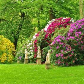 декоративные кустарники фото оформления