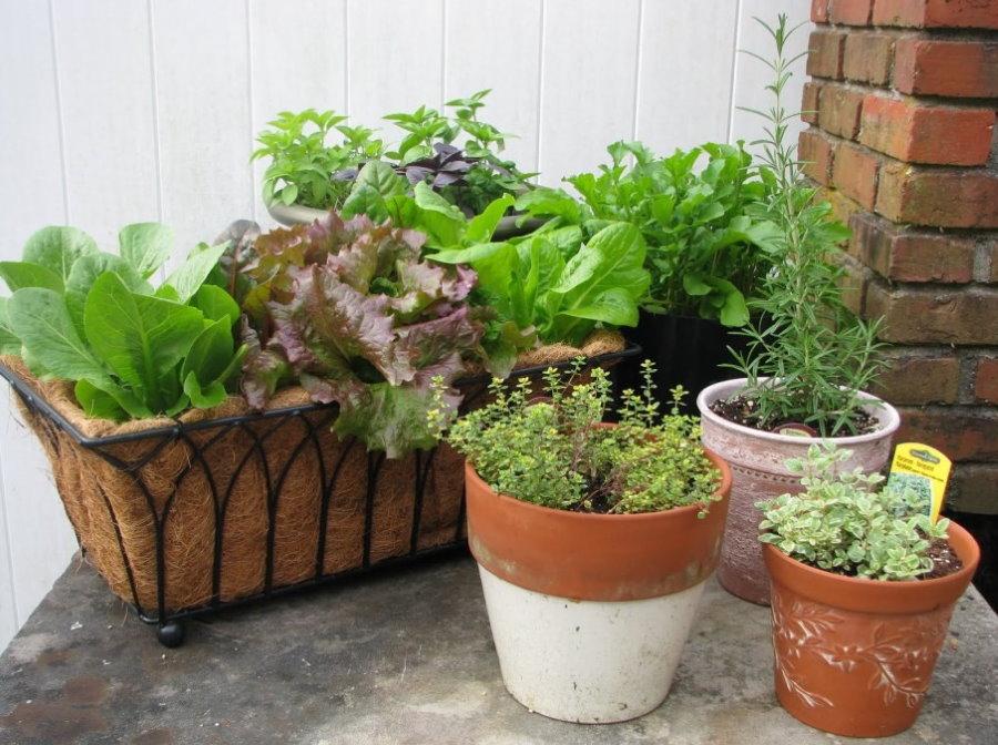 Овощные растения в контейнере и горшках
