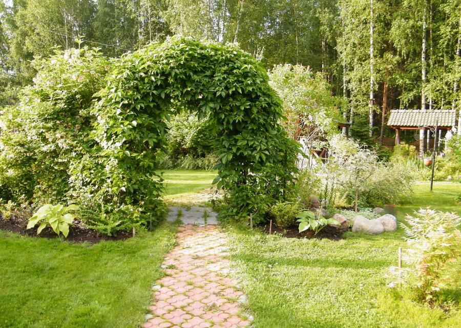 Пергола-арка с девичьим виноградом над садовой тропинкой