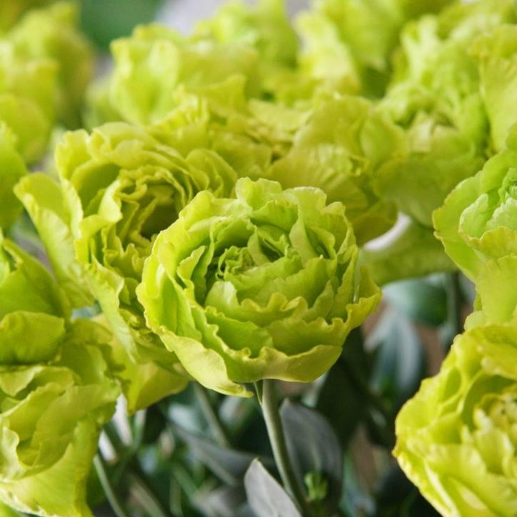Крупные цветки на стеблях эустомы сорта Lime