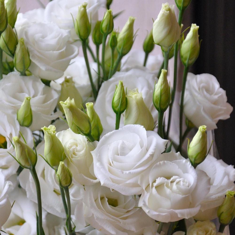 Лизиантус Rosita с белоснежными бутонами