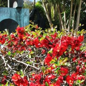 Первые цветки на колючих ветках