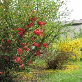 Комбинация розовых и желтых цветков в саду на даче