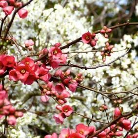 Красно-розовые цветки на фоне белых соцветий