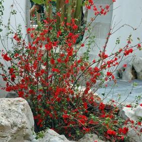 Бутовый камень под кустиком с розовыми цветками
