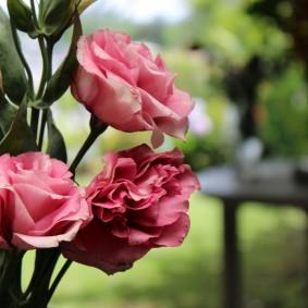 Три красивых цветка с розовыми лепестками