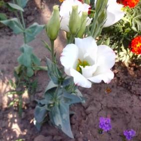 Белые цветки маленького роста