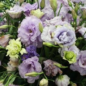 Букет невесты из роскошных эустом