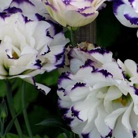 Красивые цветы для садового участка