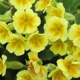Желтые цветки среднего размера