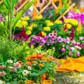 Многолетние цветы на клумбе в палисаднике