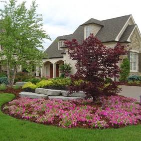 Розовые цветы на клумбе около тротуара