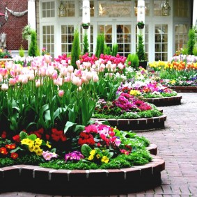Розово-белые цветки на весенних тюльпанах
