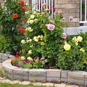 Кустики роз перед цоколем частного дома